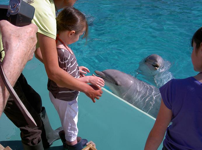 Margaux rencontre des dauphins